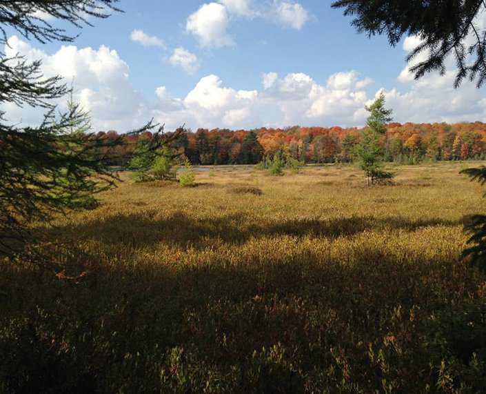 Benefits of Hunting The Wilderness Reserve