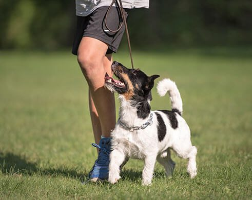 Dog Obedience Training at The Wilderness Reserve