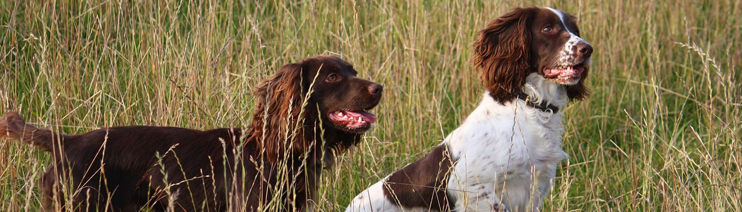 Dog Training Classes at The Wilderness Reserve