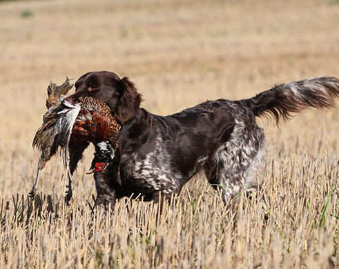 Gun Dog Training at The Wilderness Reserve