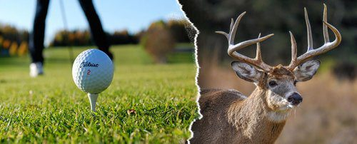 Elk or Deer Hunt with golf combo vacation package