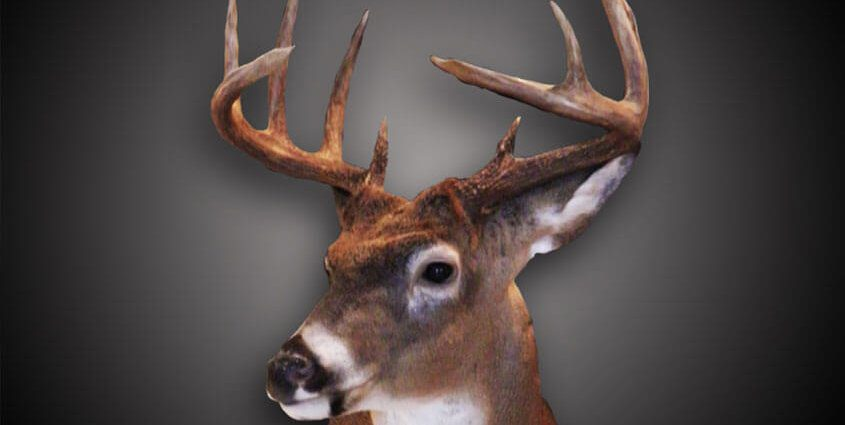 Trophy Mount To Commemorate Hunt